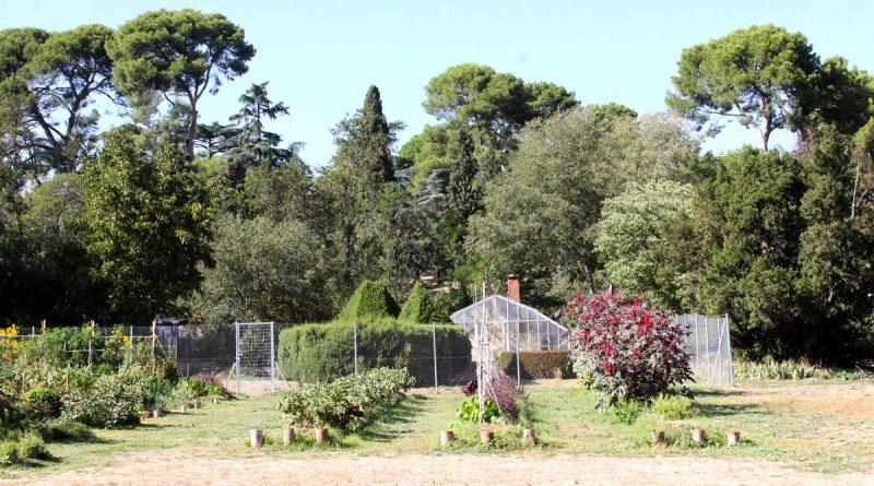La Plataforma de Torre Arias propone restaurar el viñedo histórico de la Quinta