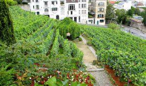 Los Viñedos de Montmartre, París