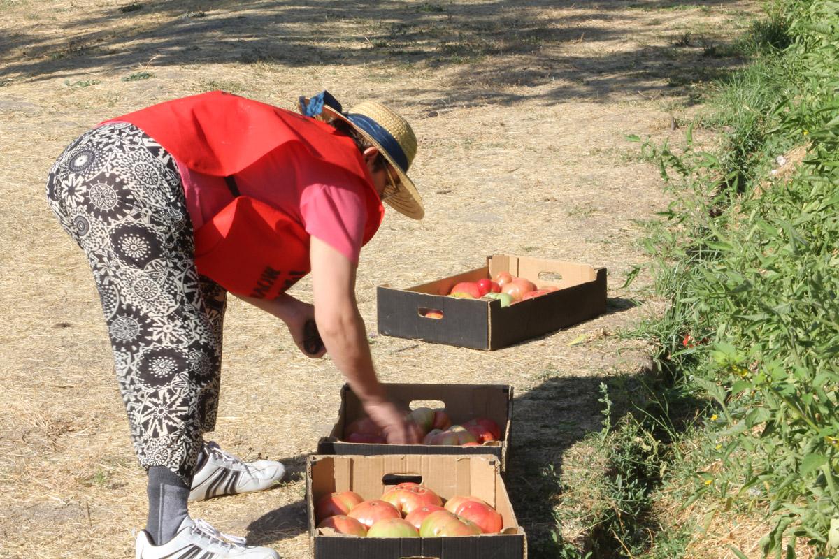 La huerta vecinal y solidaria de la aristocrática Quinta de Torre Arias