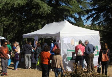 Cuatro años de propuestas para una Quinta participativa