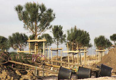 Madrid necesita árboles para frenar el cambio climático