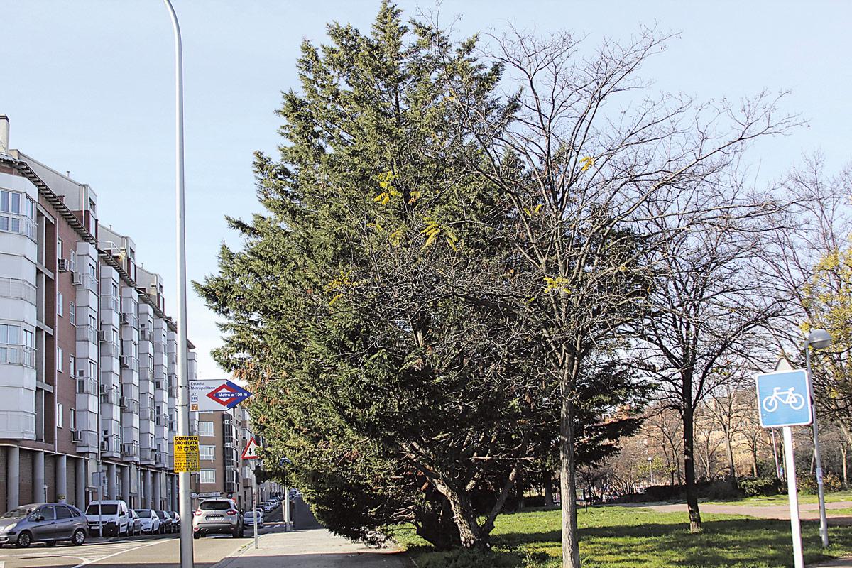 Árboles Calle de Estocolmo