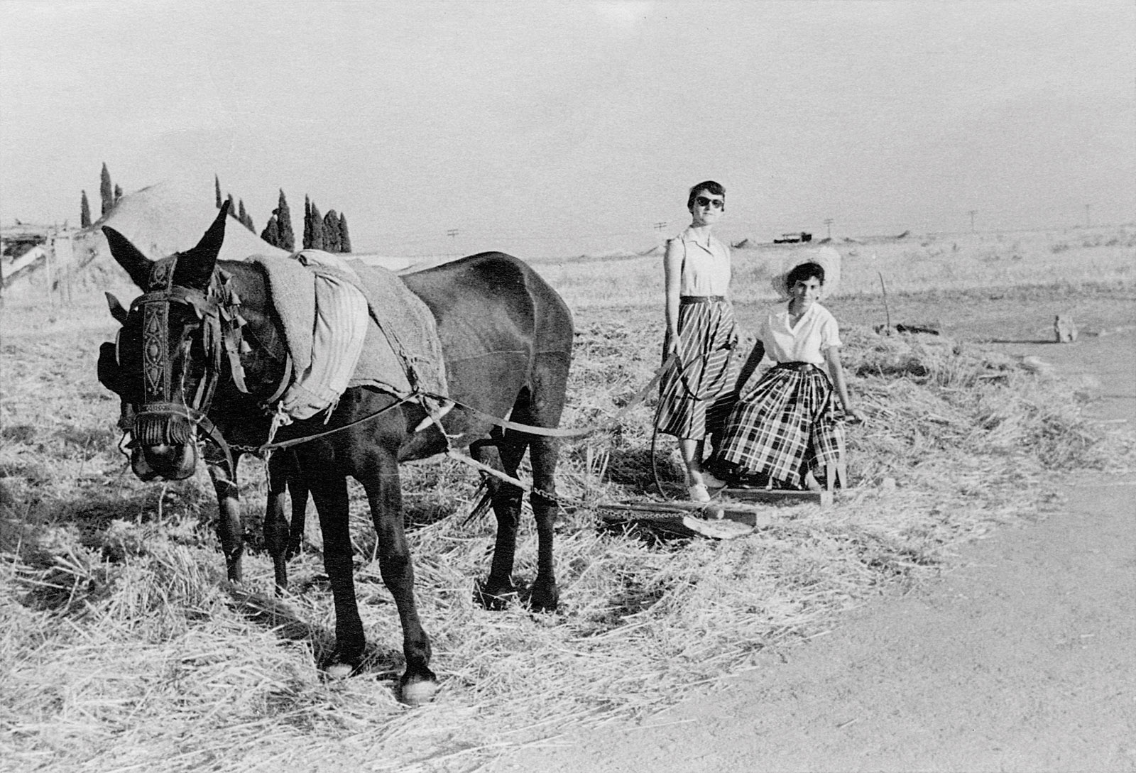 Las mulas fueron muy importantes en el cultivo de los cereales y legumbres en Canillejas. Al fondo, tras el montón de trigo, el cementerio de Canillejas.