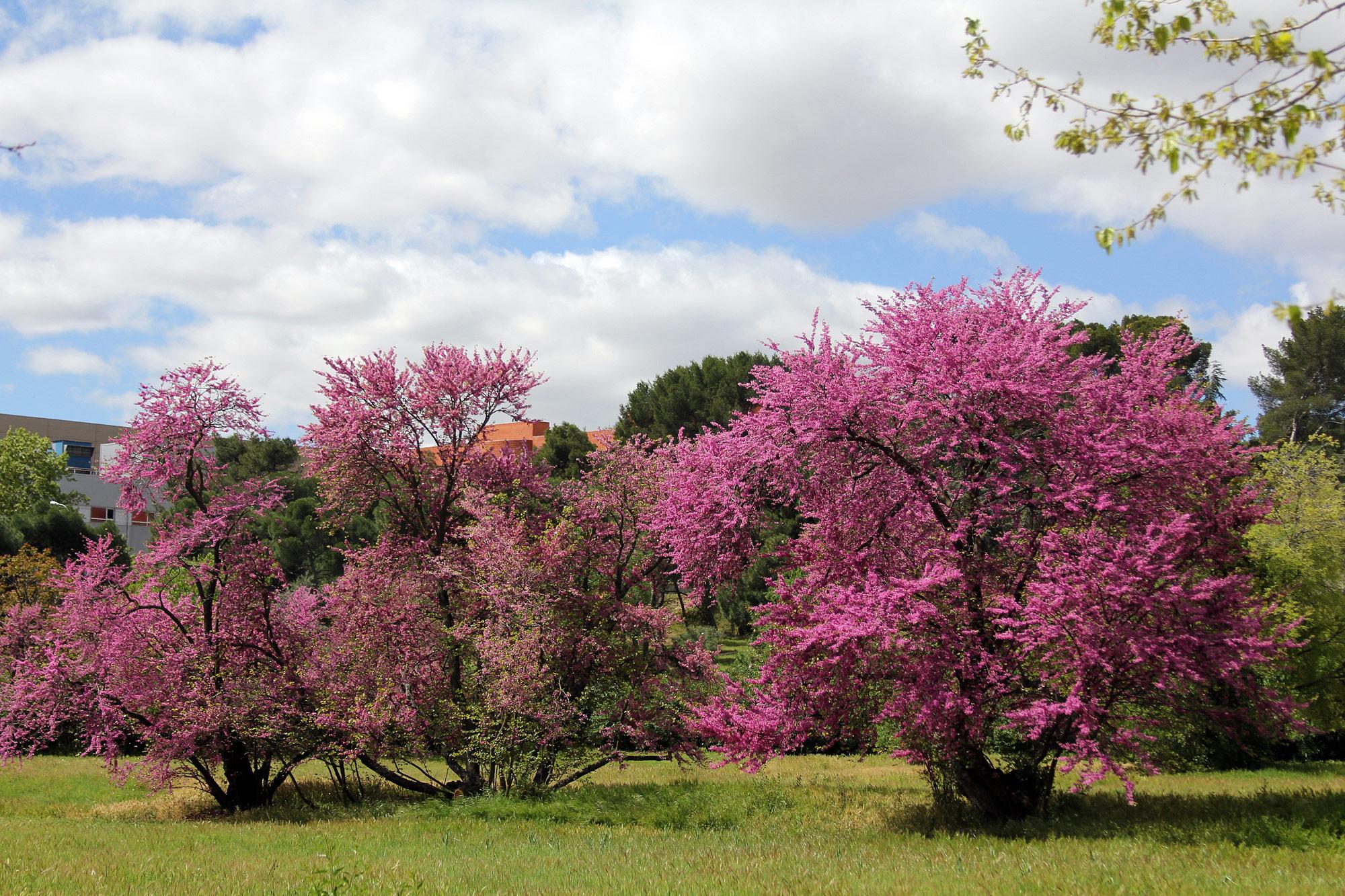 Torre-Arias - Los árboles del amor