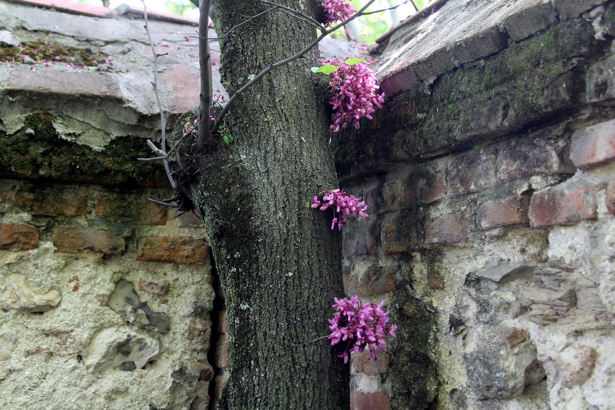 Torre-Arias - Árbol del amor