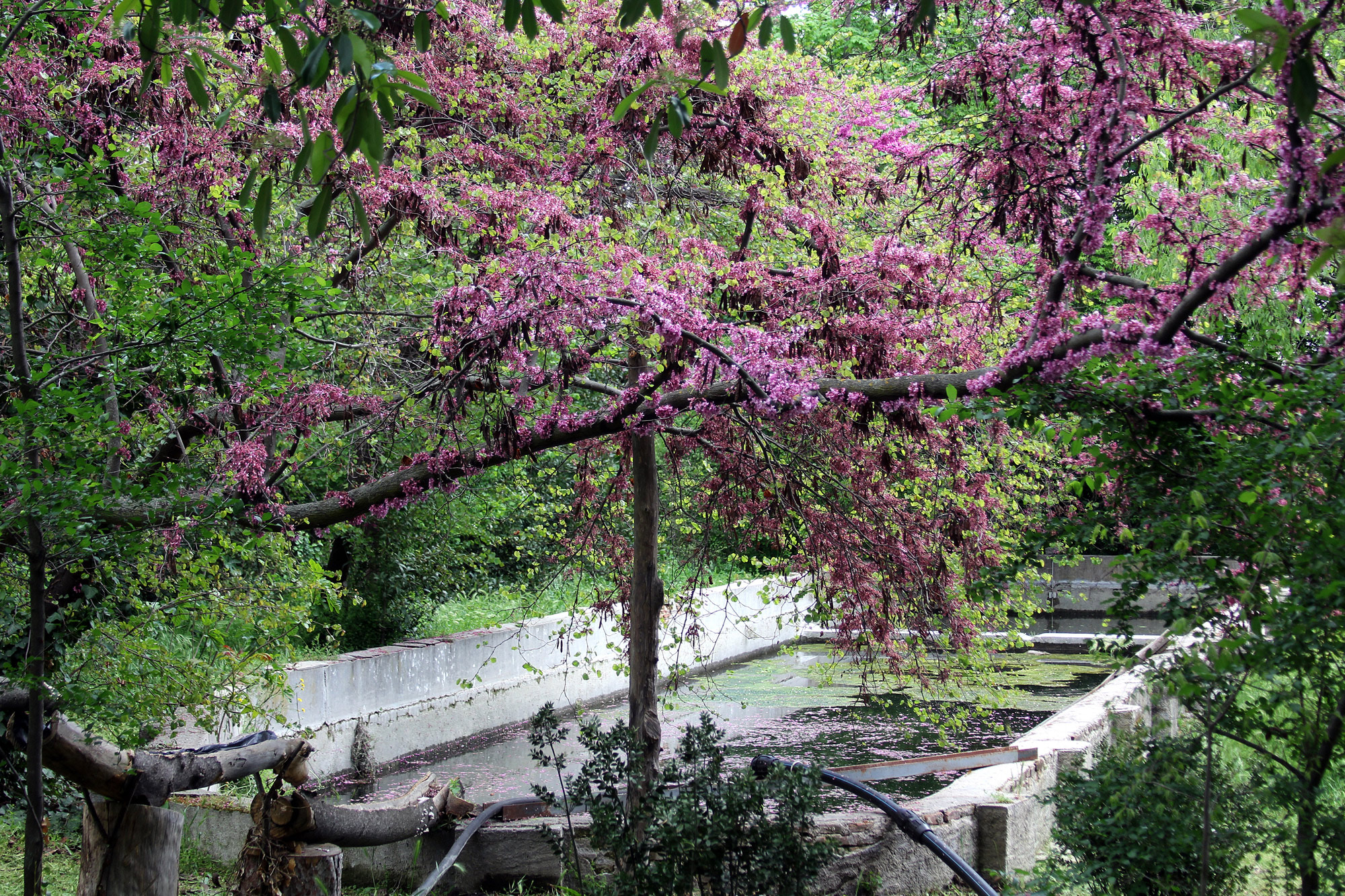 La Quinta de Torre Arias—El estanque de La Minaya