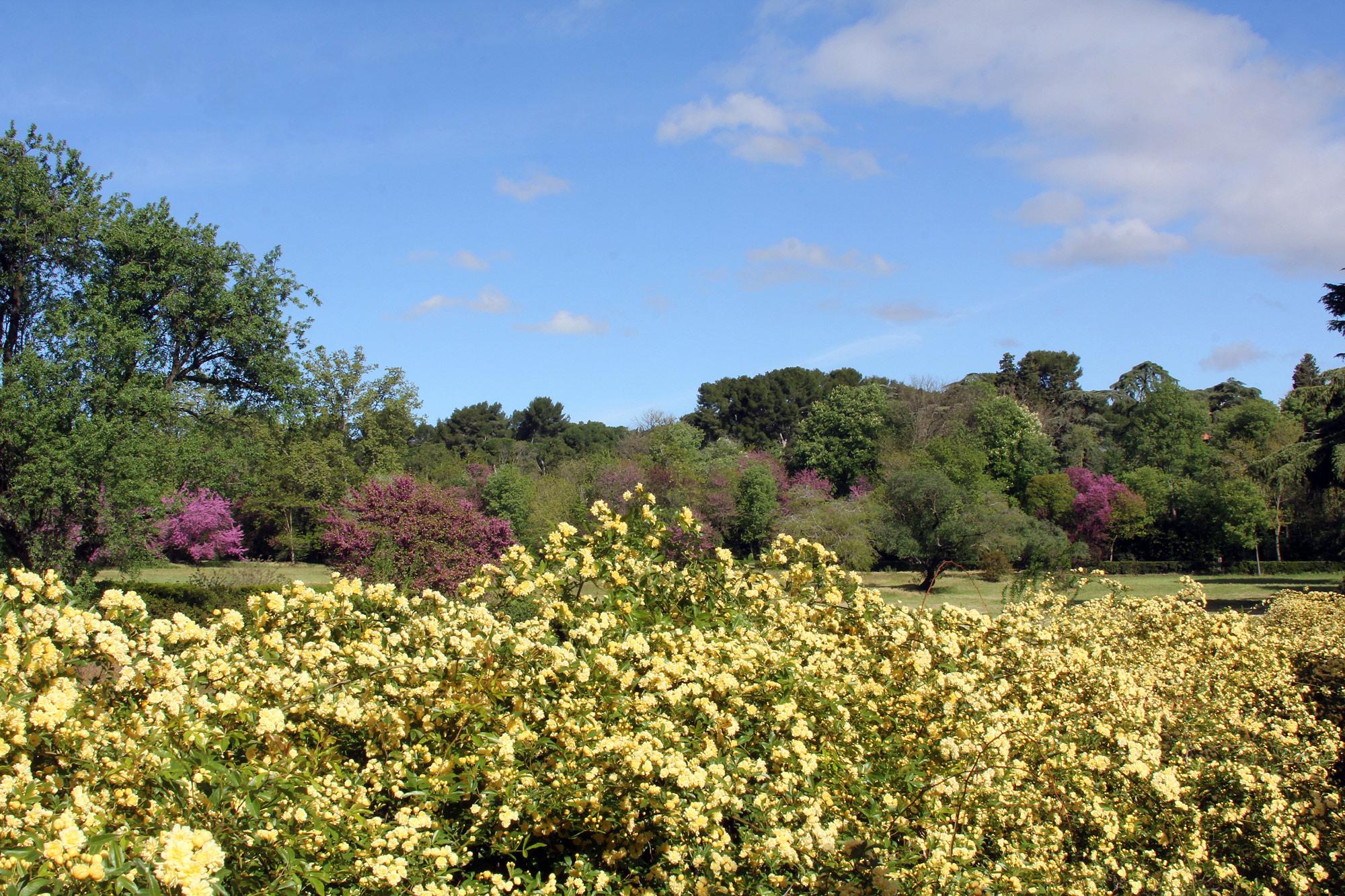 En la Quinta de Canillejas la fragancia de las rosas de pitiminí evocan tiempos pasados, olores olvidados, quietud, como si la vida se parase en el mismo corazón de la ciudad.