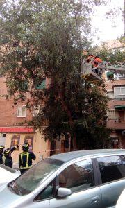 Cae un árbol en mal estado en la calle Lucano