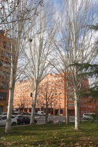 Árboles de la calle Toscana