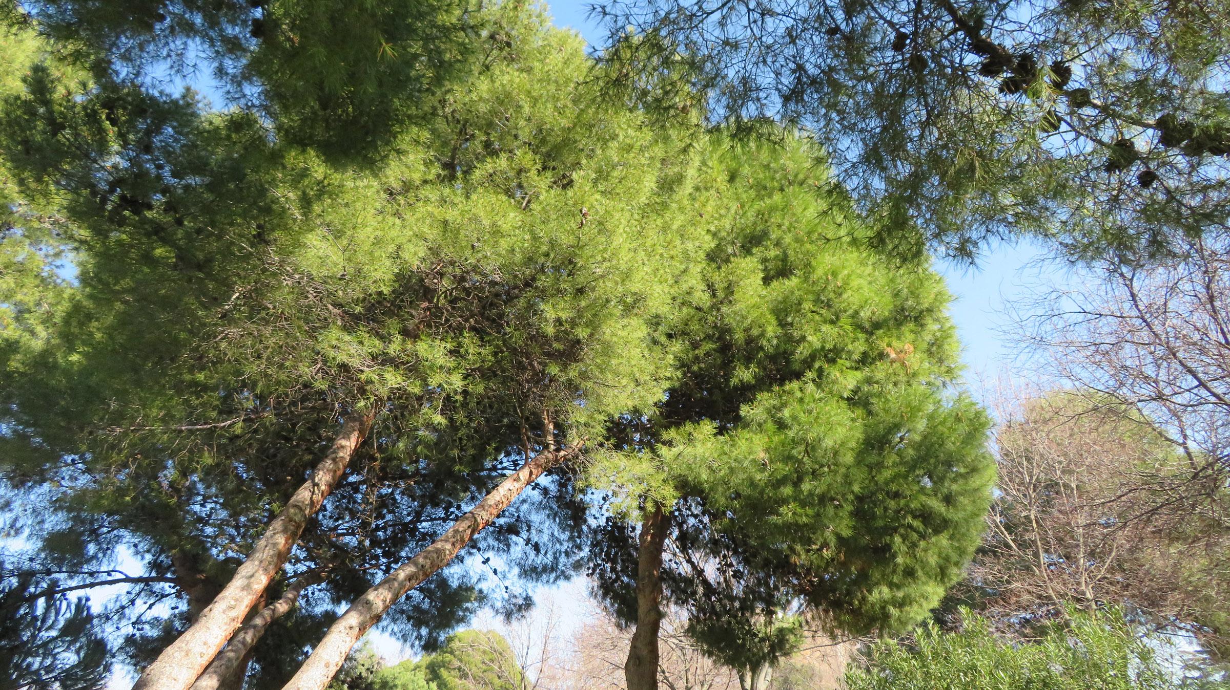Parque del Butrón
