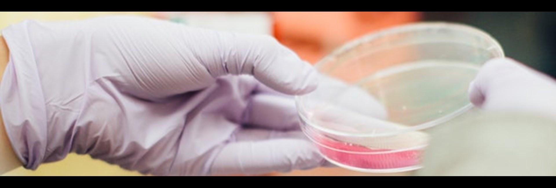 El método empleado permite a Ingenasa desarrollar los tests sin tener en el laboratorio presencia del coronavirus