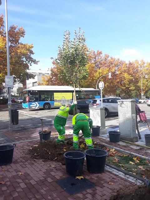 La mayor parte de los árboles se plantarán en espacios viarios aunque también hay unidades para alcorques corridos terrizos y zonas ajardinadas
