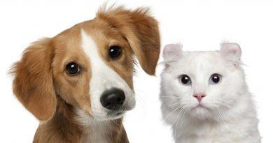 IV feria de la Adopción de animales