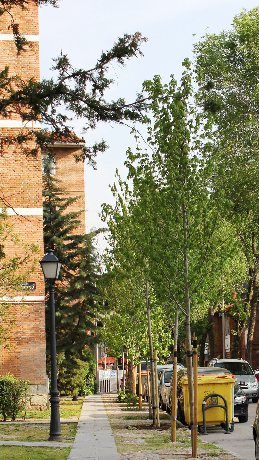 Se ha optado por la especie de árbol más adecuada para cada ubicación. valorando la disposición del espacio y el tamaño que alcanzará en su etapa madura